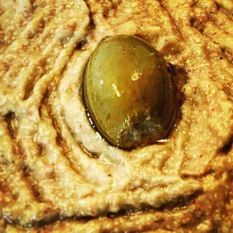 greek fish roe Taramosalata recipe (Greek fish roe dip)